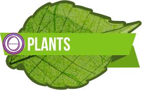 Plant Practitioner Training